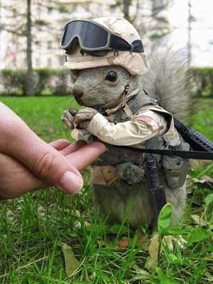 http://light-spark.com/share/funnies/ArmySquirrel.jpg